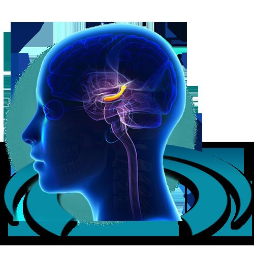 МРТ диагностика болезни Альцгеймера