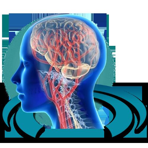 МРТ артерий головного мозга