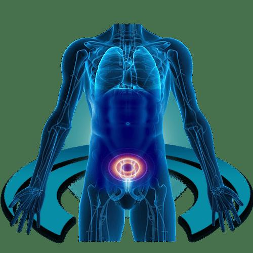 МРТ наружных половых органов
